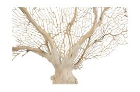 Coastal Coral