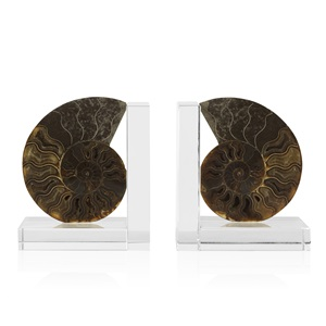 Ammonite Bookends