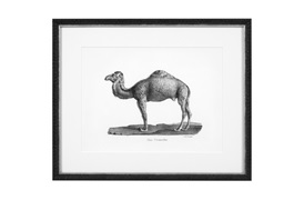 Historical Animals Print by Eichholtz (Set of 6)