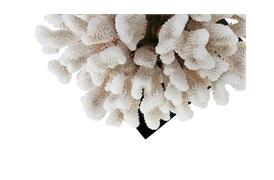 Coastals Coral